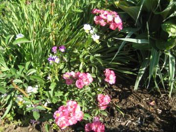 Розы цветут - Страница 40 QmCbX