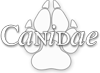 Wilde honden, jakhalzen, wolven, vossen & coyotes