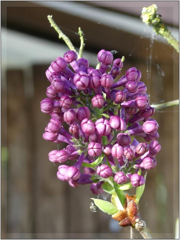 couleur lilas + rajout  P1060624