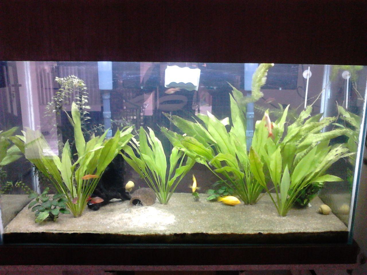 Meu aquário de 250l DSC_5182