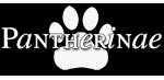 Tijgers, leeuwen, luipaarden, sneeuwluipaarden, jaguars & nevelpanters