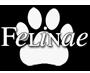 Lynxen, cheeta's, caracallen, servallen, poema's & ocelotten