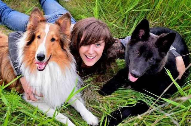 Alaskan noble companion dog 2n6hgn4