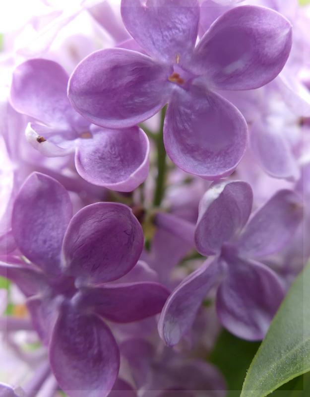 couleur lilas + rajout  1060893