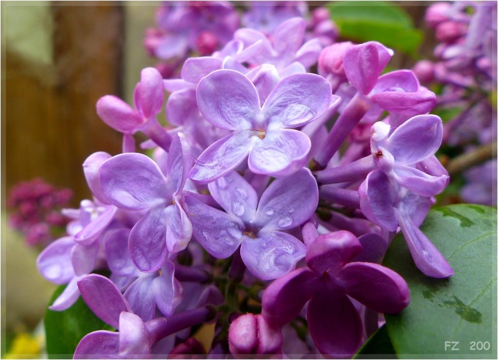 couleur lilas + rajout  P1320871
