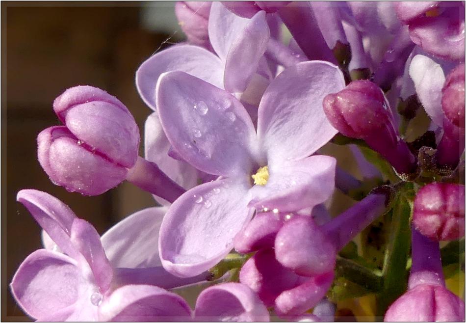 couleur lilas + rajout  1060610