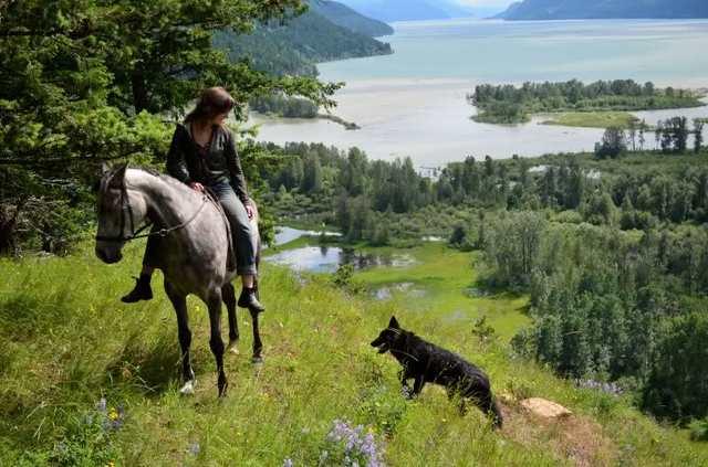 Alaskan noble companion dog Snjodf