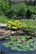 Léto na zahradě DSC_0115