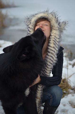 Alaskan noble companion dog T4yf7l