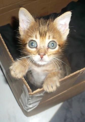 Ma Petite gatita de 1 mes en adopción- Écija Petit