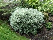 Určení druhu rostliny - Stránka 6 IMG_20170622_131944