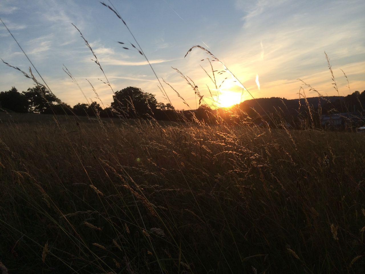Sonnenuntergang IMG_2302