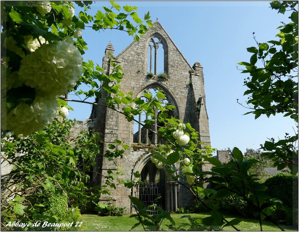 Fleurs de l'abbaye... P1070578