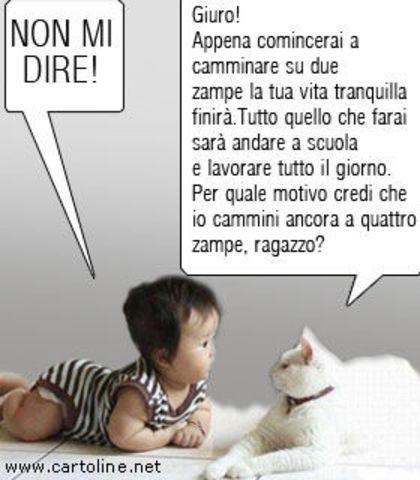 VIGNETTE DIVERTENTI - Pagina 24 Animali_frase_divertente_gatto