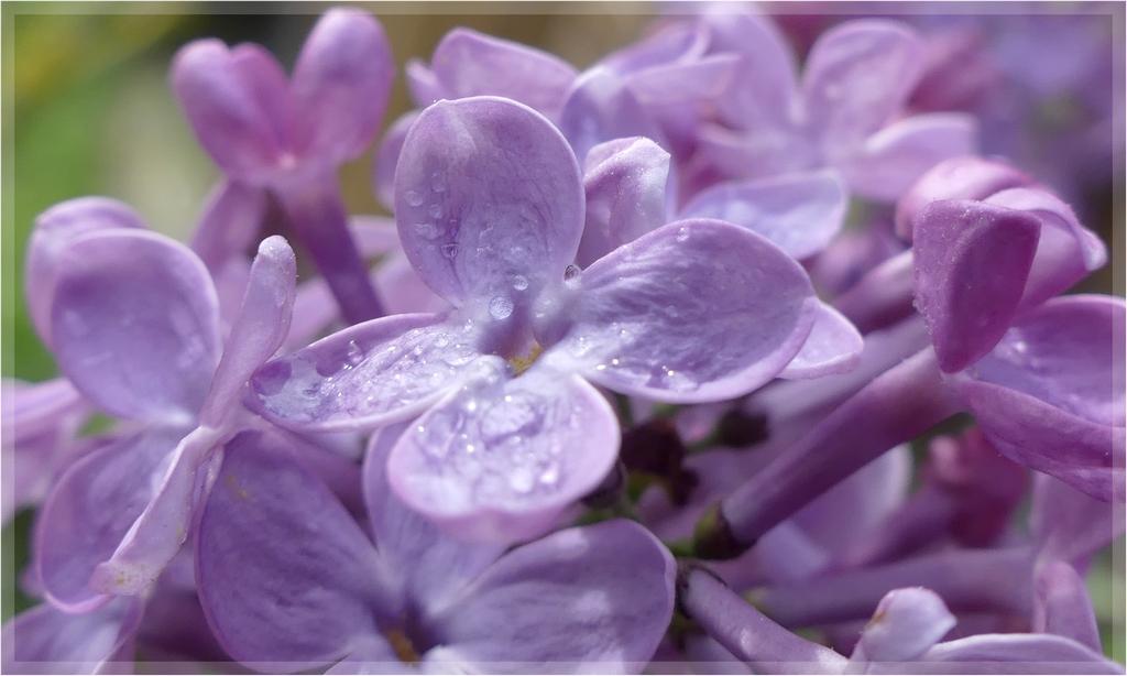 couleur lilas + rajout  1060494