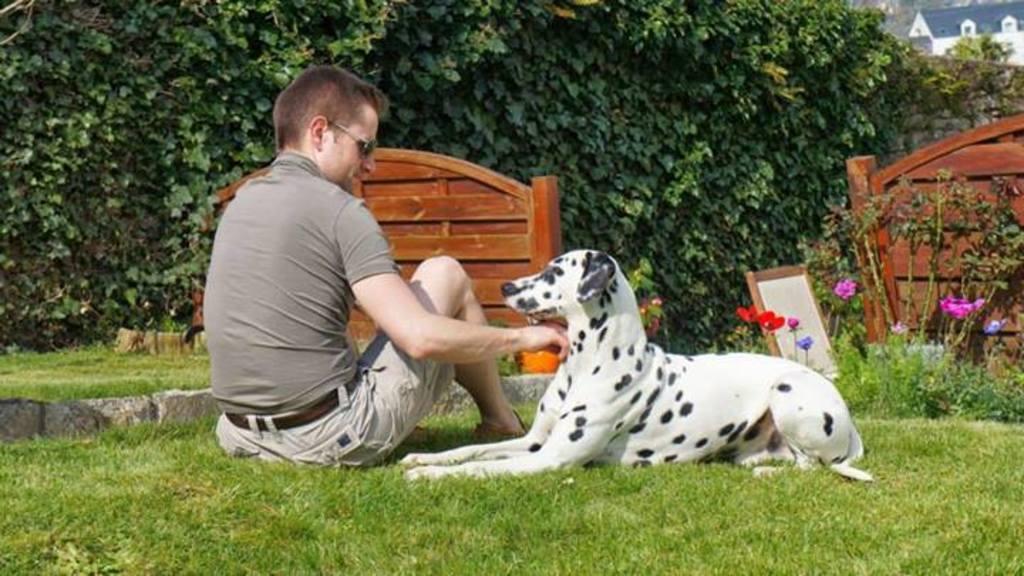 juanita galga mature à l'adoption   Adoptée - Page 5 1394132_1434327833456973_1190859147_n