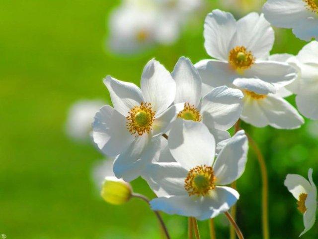 Fotografije cvijeća - Page 15 25233_103932046310292_5681986_n
