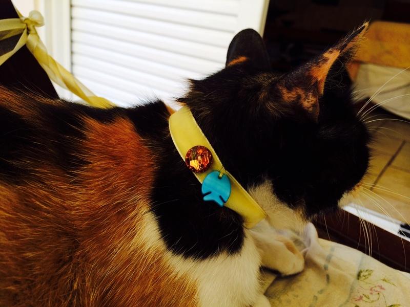 Κάρι, μια υπέροχη γατούλα και τα 4 μωράκια της - Σελίδα 6 Milou_1