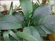 Určení druhu rostliny DSCF0056