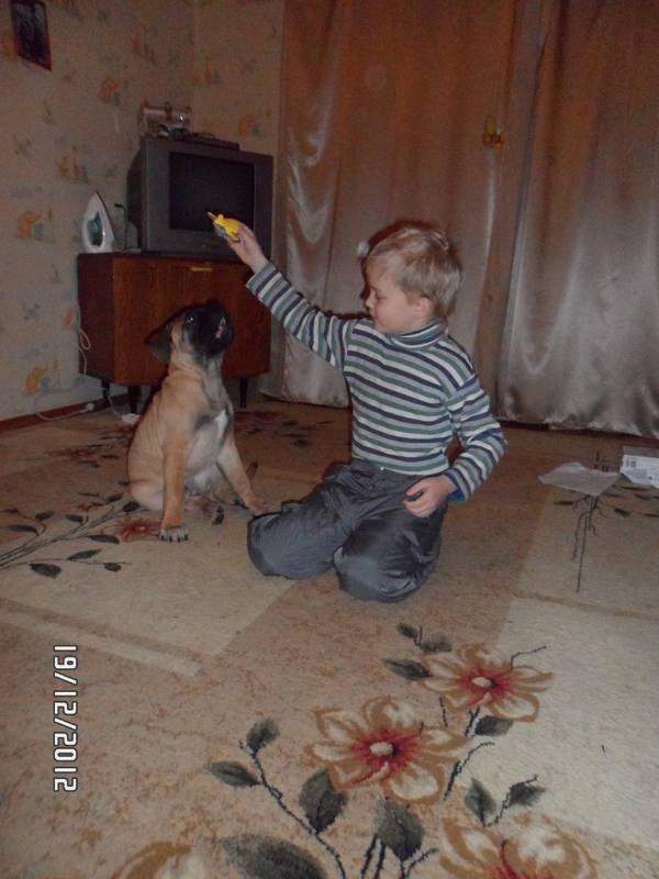 """Фотографии """"Бульмастиф и дети"""" - Страница 3 XENxm"""