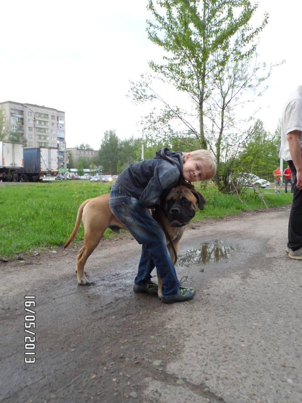 """Фотографии """"Бульмастиф и дети"""" - Страница 3 F7gJ8"""