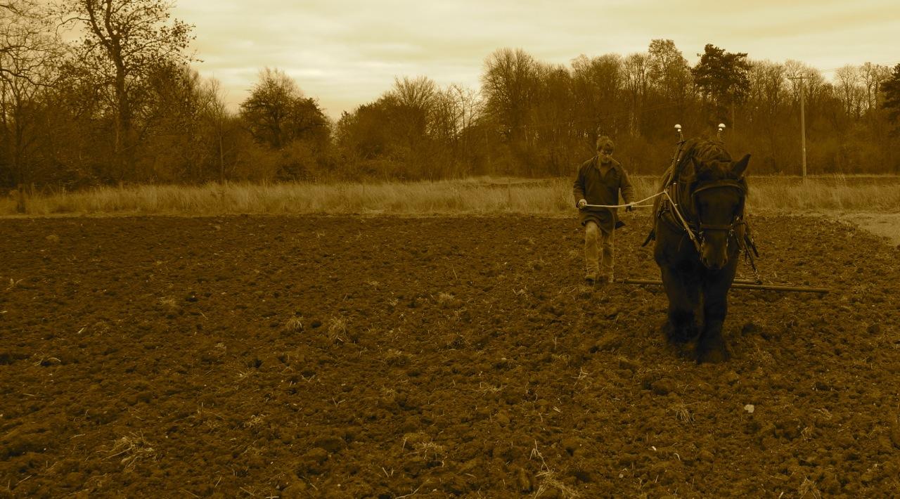 Tudor monastery farm Dsc07529