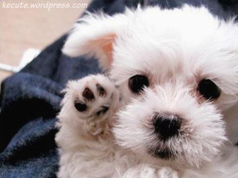 Μια εικόνα για τον αποπάνω - Σελίδα 3 Baby-puppies