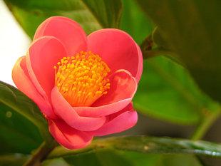 10 loại hoa mang may mắn cho tết Nhâm Thìn Hoa_haiduong