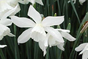 10 loại hoa mang may mắn cho tết Nhâm Thìn Hoa_thuytien