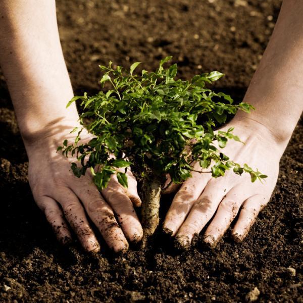 Các thành phần của đất – Giúp bạn cải tạo đất xấu thành đất tốt Dat-phu-hop-cho-cay-trong