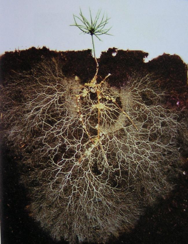 Các thành phần của đất – Giúp bạn cải tạo đất xấu thành đất tốt Dat-trong-cay