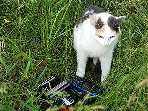 Под Самарой кот ворует мобильники у туристов! 2675956