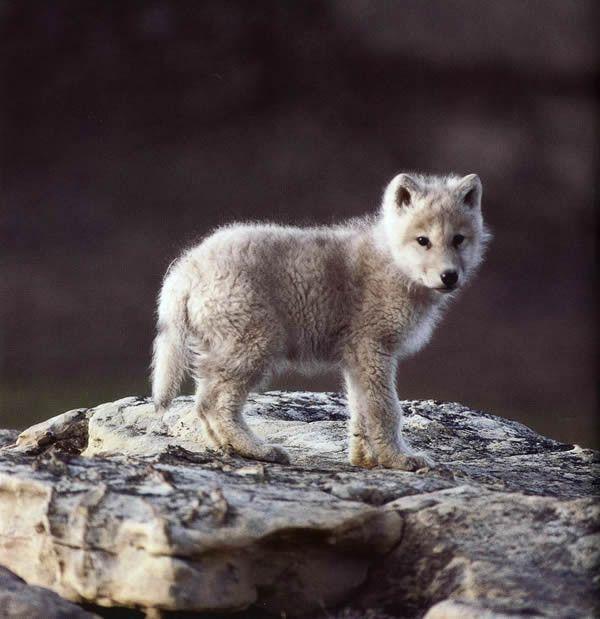 l'animal du petit loulou - 31 octobre trouvé par ginto et martin 9ce6e3ed