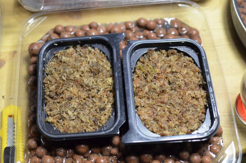 Les semis de Sapoluxe Nepc1