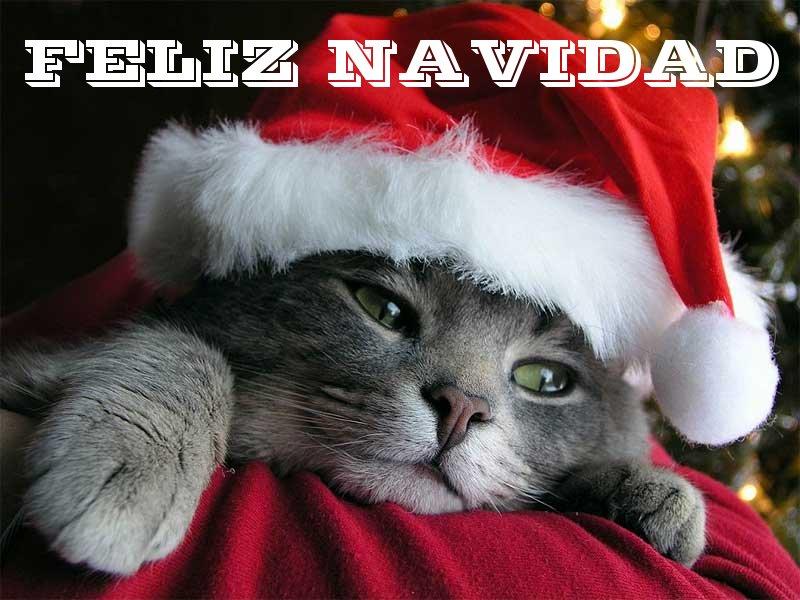 ¡¡FELICES FIESTAS!!! Feliz-navidad-gatito