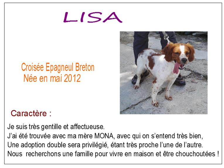 LISA - x epagneul breton 6 ans - SBPA à Marmagne (18) Lisa