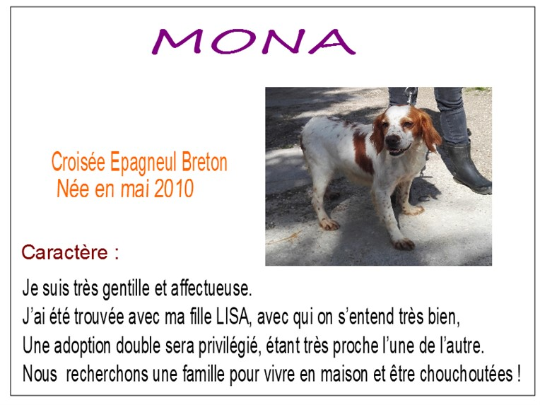 MONA - x epagneul breto 8 ans -  SBPA à Marmagne (18) Mona