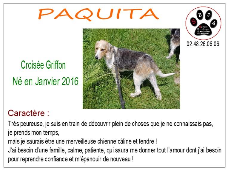 PAQUITA -  x griffon 5 ans - SBPA à Marmagne (18) Paquita