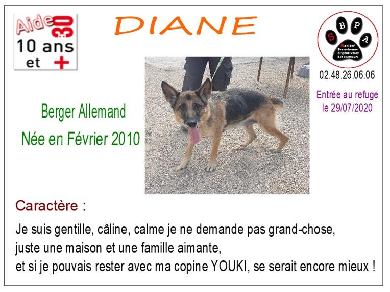 DIANE - berger allemand 10 ans -  SBPA à Marmagne (18) Diane