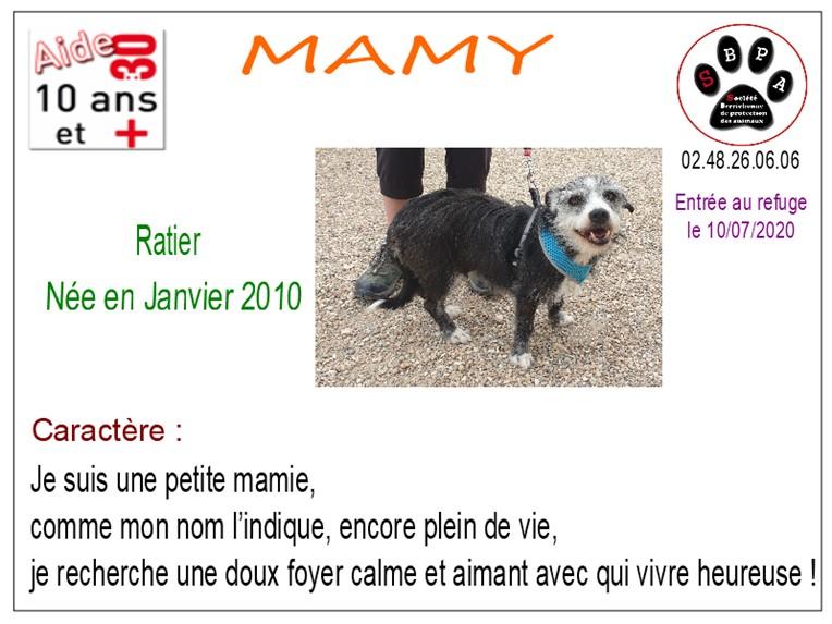 MAMY - ratier 10 ans - SBPA à Marmagne (18) Mamy