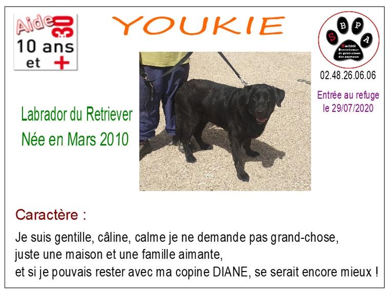 YOUKIE - labrador 10 ans - SBPA à Marmagne (18) Youkie