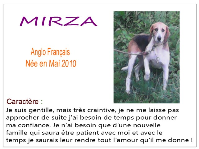 MIRZA - anglo 8 ans - SBPA à Marmagne (18) Mirza