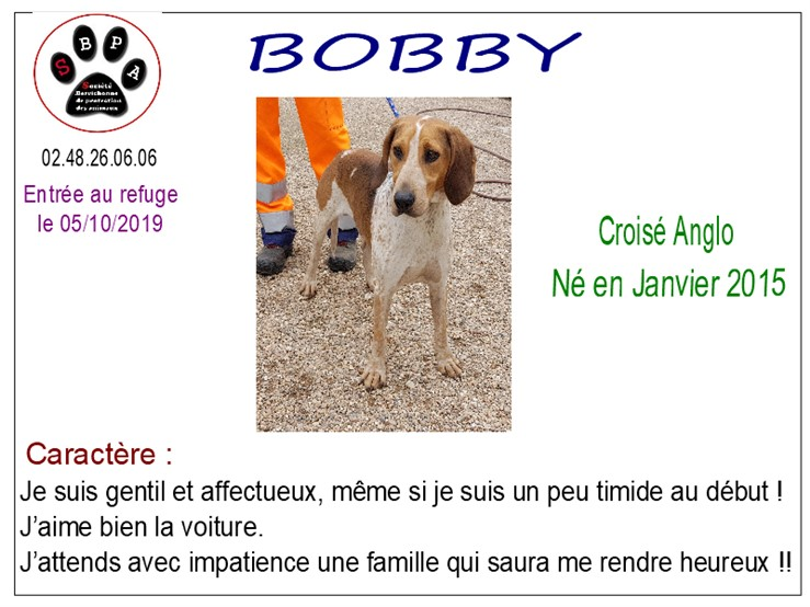 BOBBY - x anglo 5 ans - SBPA à Marmagne (18) Bobby