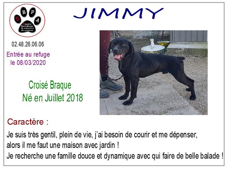 JIMMY - x braque 2 ans - SBPA à Marmagne (18) Jimmy