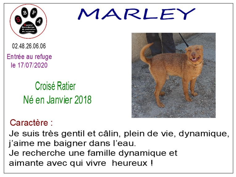 MARLEY - ratier 2 ans - SBPA à Marmagne (18) Marley