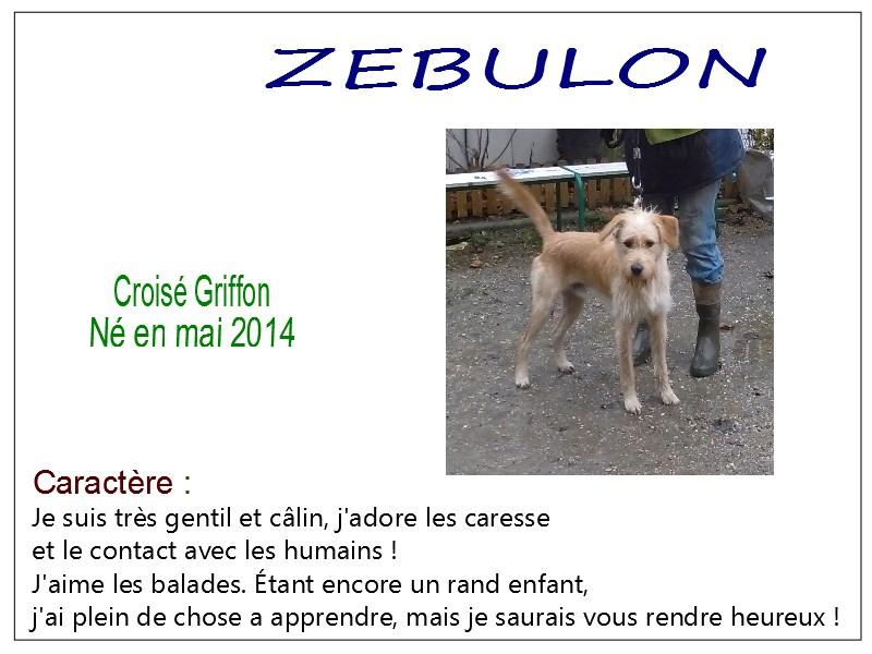 ZEBULON -  x griffon 6 ans  (6 ans de refuge)- SBPA à Marmagne (18) Zebulon