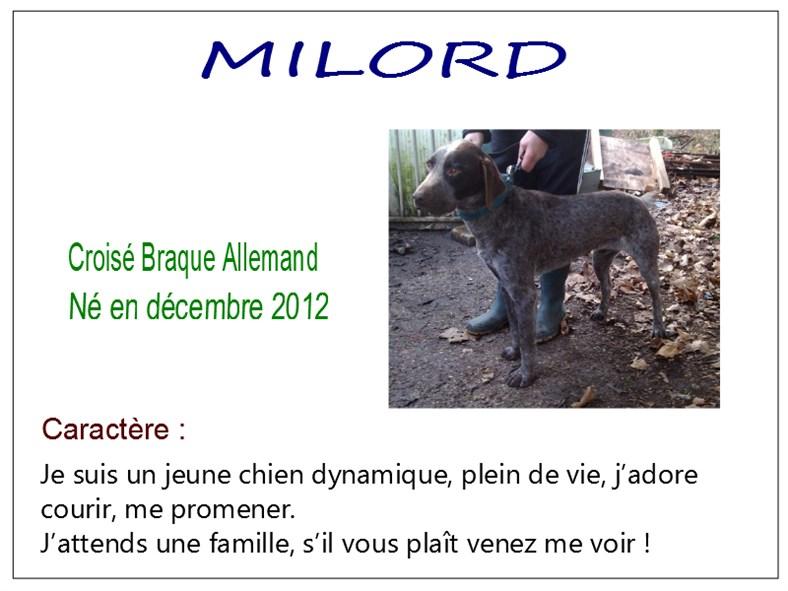 MILORD - x braque allemand 8 ans  (7 ans de refuge) - SBPA à Marmagne (18) Milord