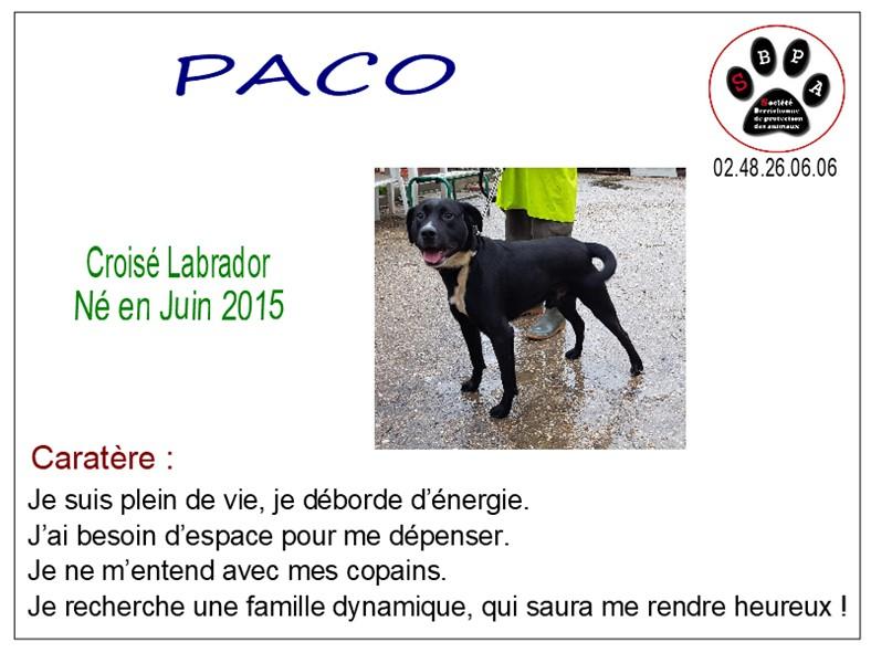 PACO - x labrador 3 ans - SBPA à Marmagne (18) Paco