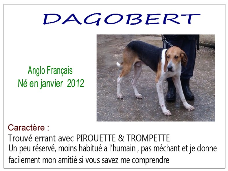 DAGOBERT - anglo 6 ans - SBPA à Marmagne (18) Dagobert