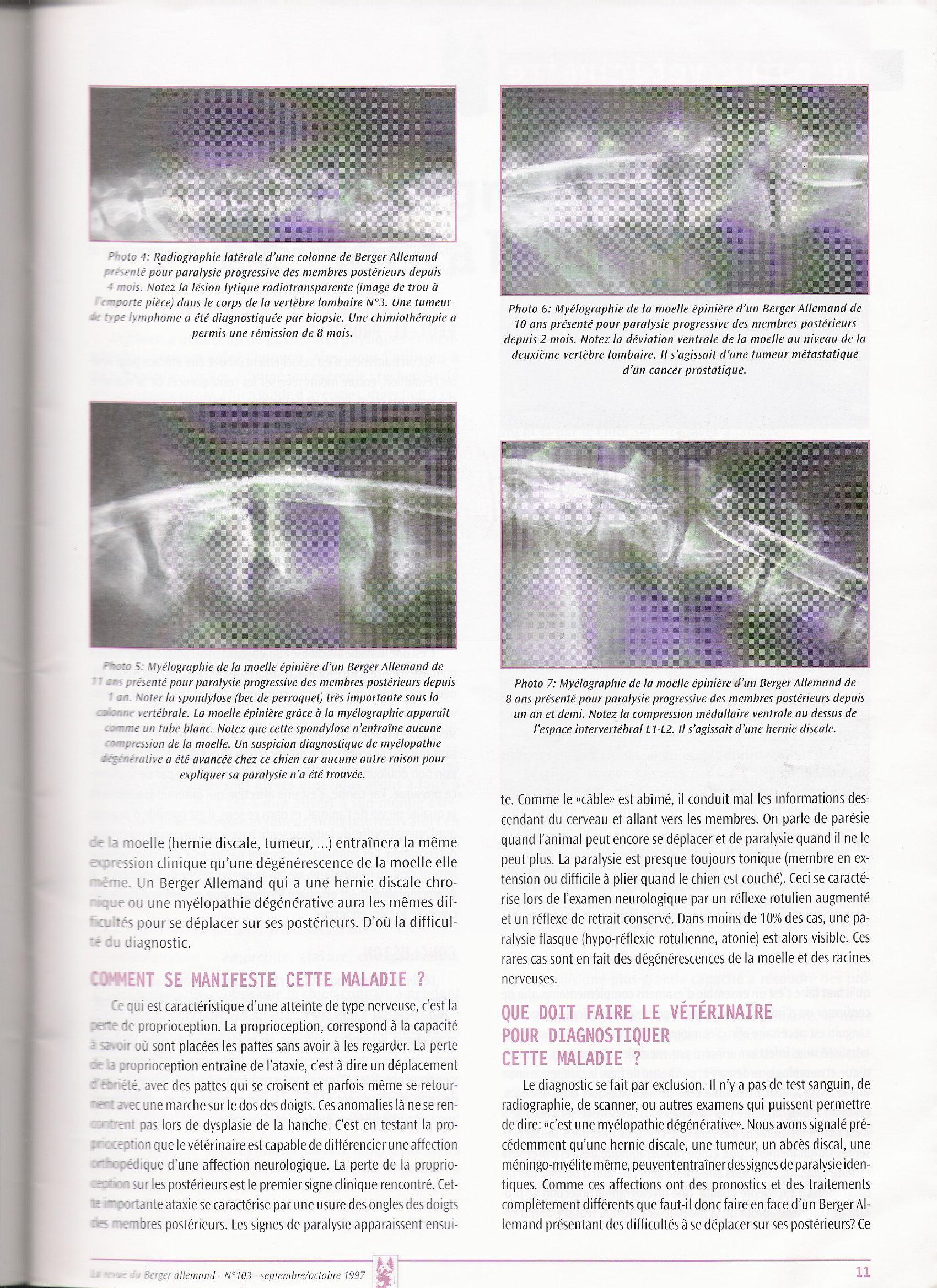 Myélopathie dégénérative du chien - dépistage - Infos ? Mielopathie2
